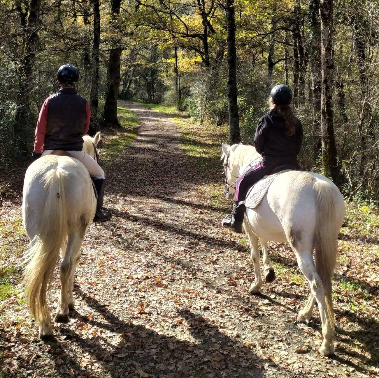 Hípica Ultzama - Paseos a caballo