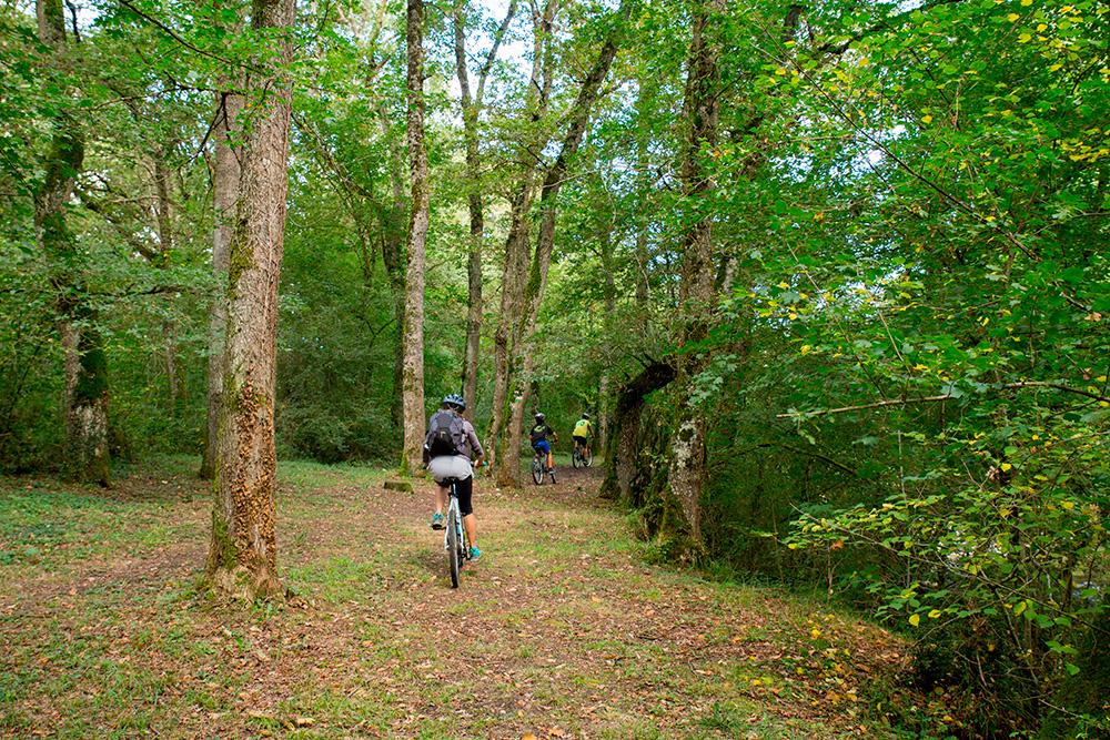 Paseo en bici por los hayedos