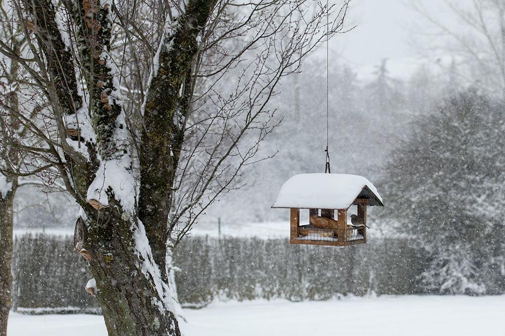 La casita de los pájaros