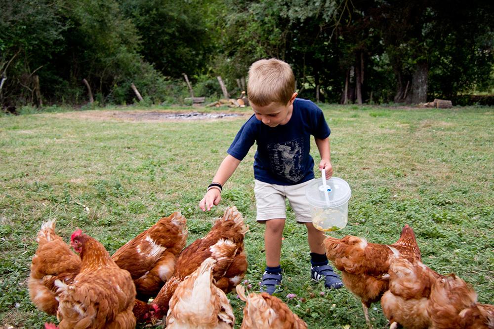 Alimentando las gallinas